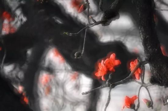 〖讲座预告〗3月16日伍学文带您拍摄珠海木棉